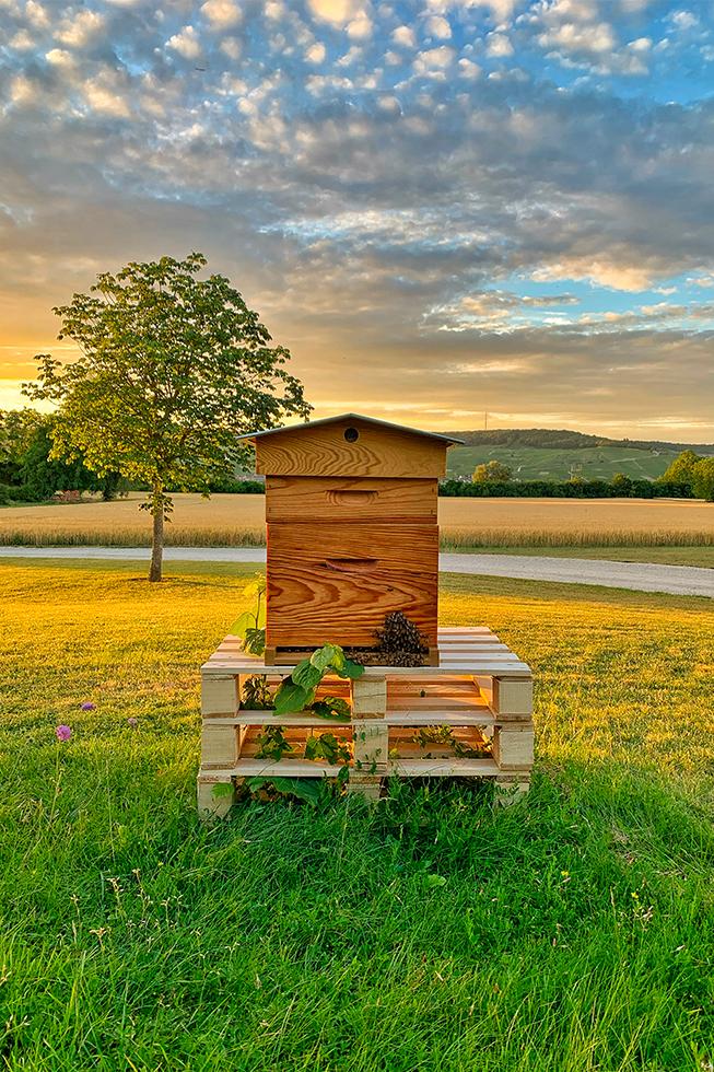 L'apiculture au domaine.